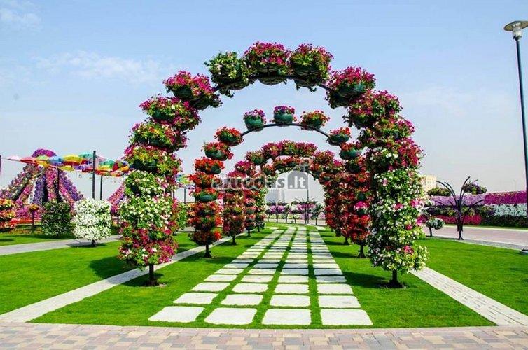 Arkos iš gėlių