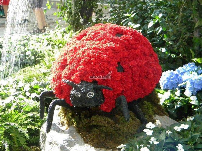Gėlės krūmas - boružė