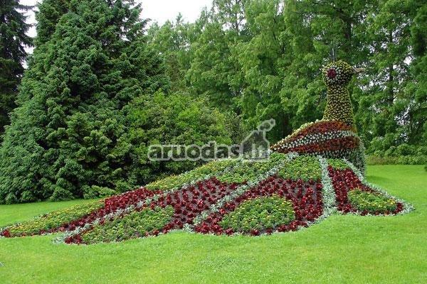Gėlių paukštis vejoje