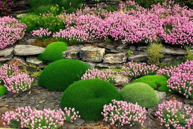 Kontrastinga gėlių ir akmenų idėja