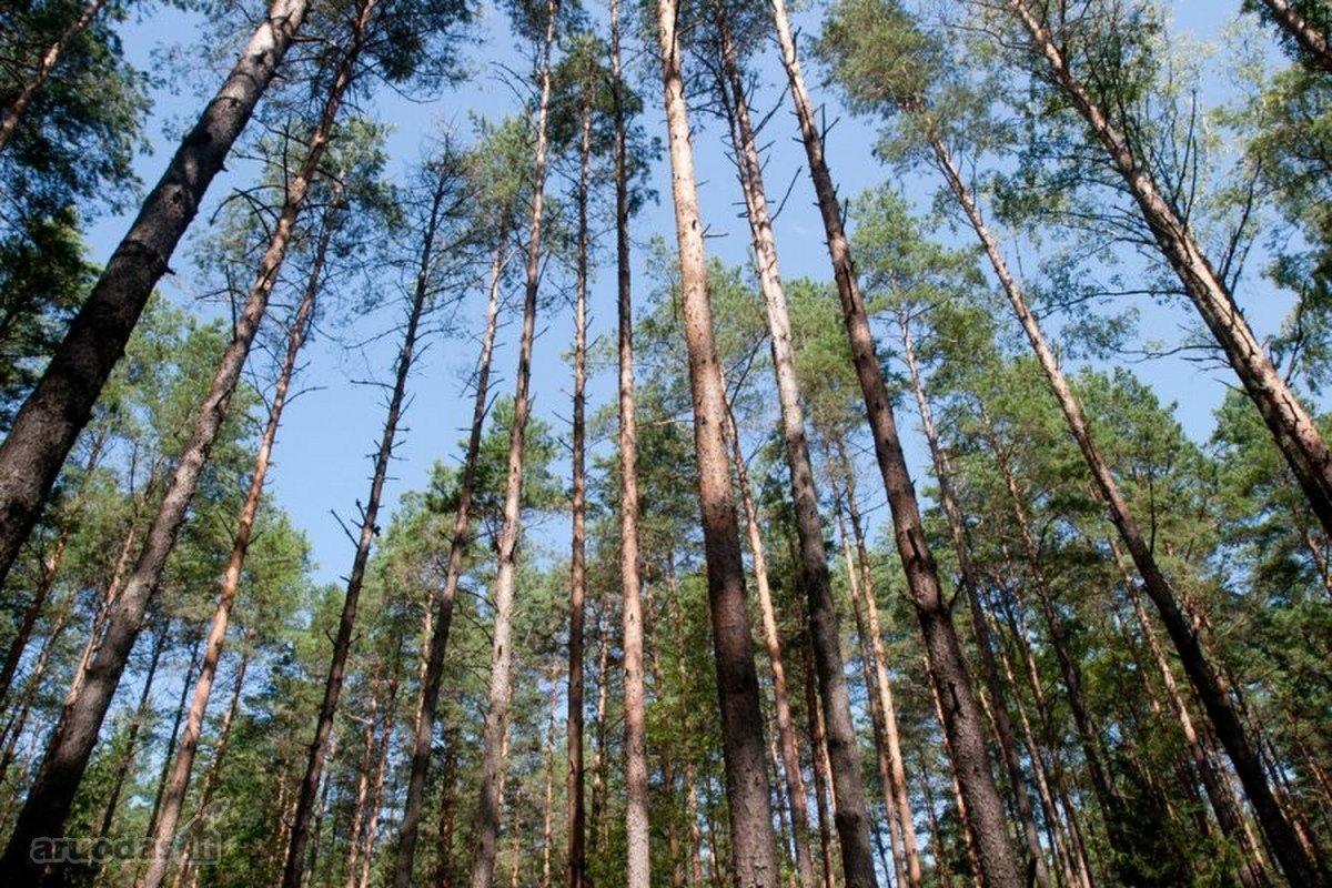 Šalčininkų r. sav., Gojaus k., miškų ūkio paskirties sklypas