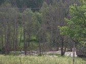 Parduodama puiki, rąstinė sodyba miške.