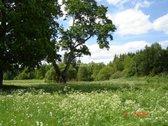 Miške, tarp ežerų parduodama 14,25 ha sodyba