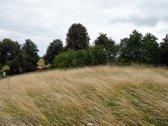 Trakų rajone, Užukulpio kaime parduodame namų