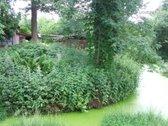 Parduodamas simpatiškas žemės sklypas su sodo