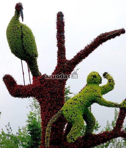 Gyvūnai iš augalų
