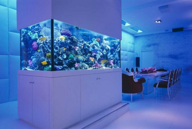 Akvariumo akcentas valgomajame