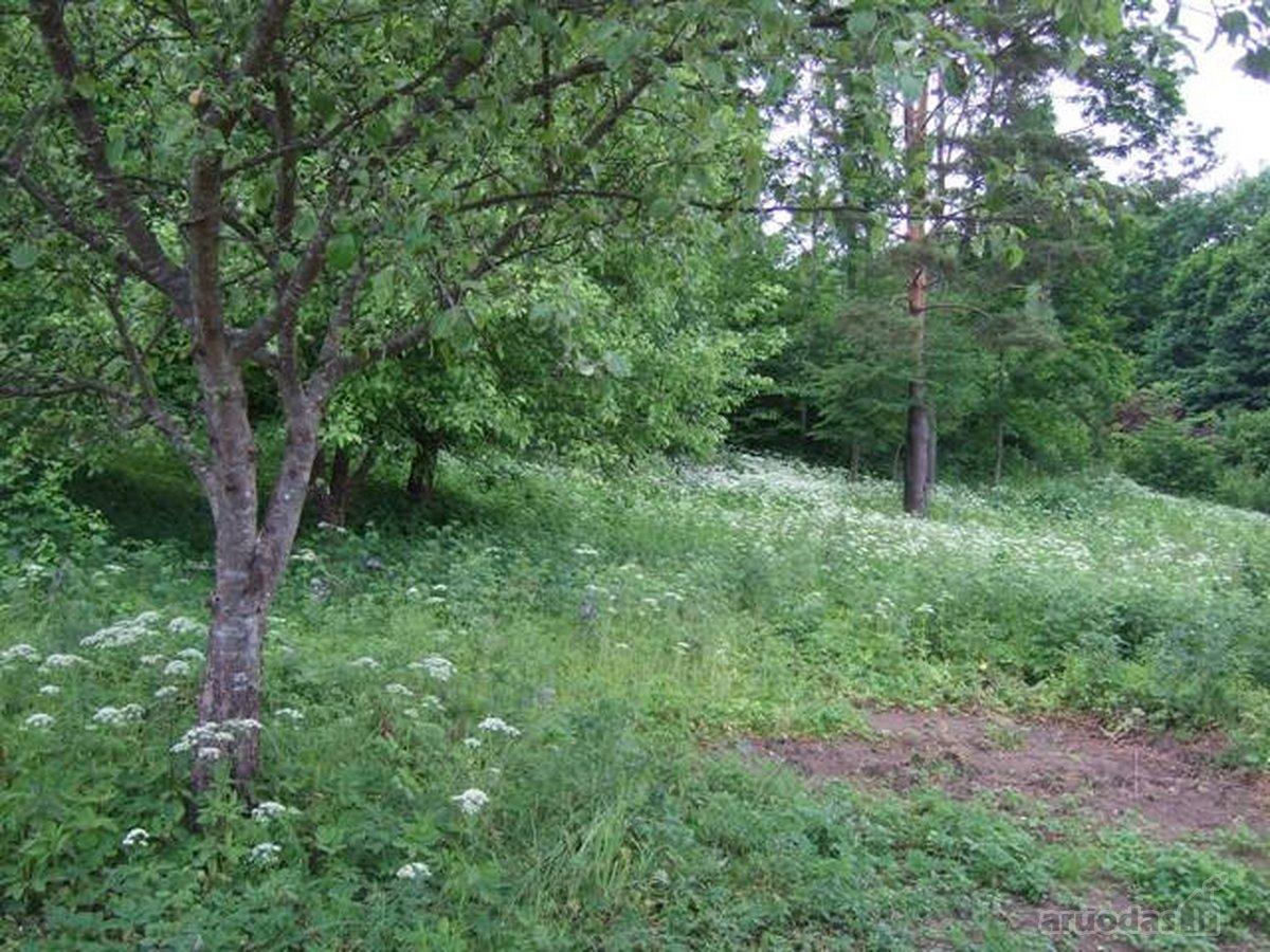 Trakų r. sav., Valų k., kolektyvinis sodas sklypas