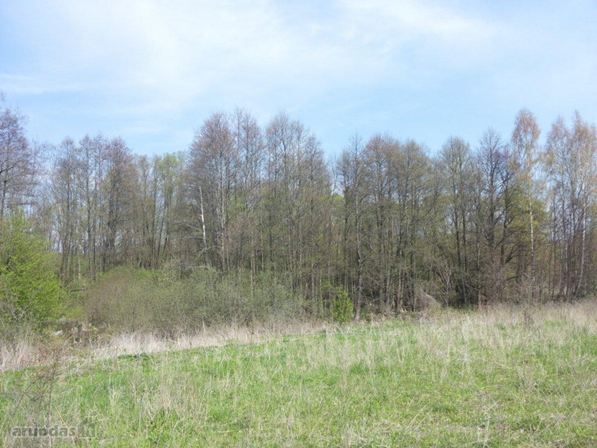 Kalvarijos sav., Akmenynų k., miškų ūkio paskirties sklypas