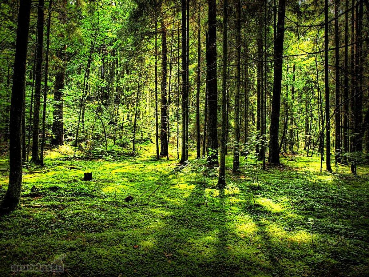 Kauno r. sav., Preišiogalos k., miškų ūkio paskirties sklypas