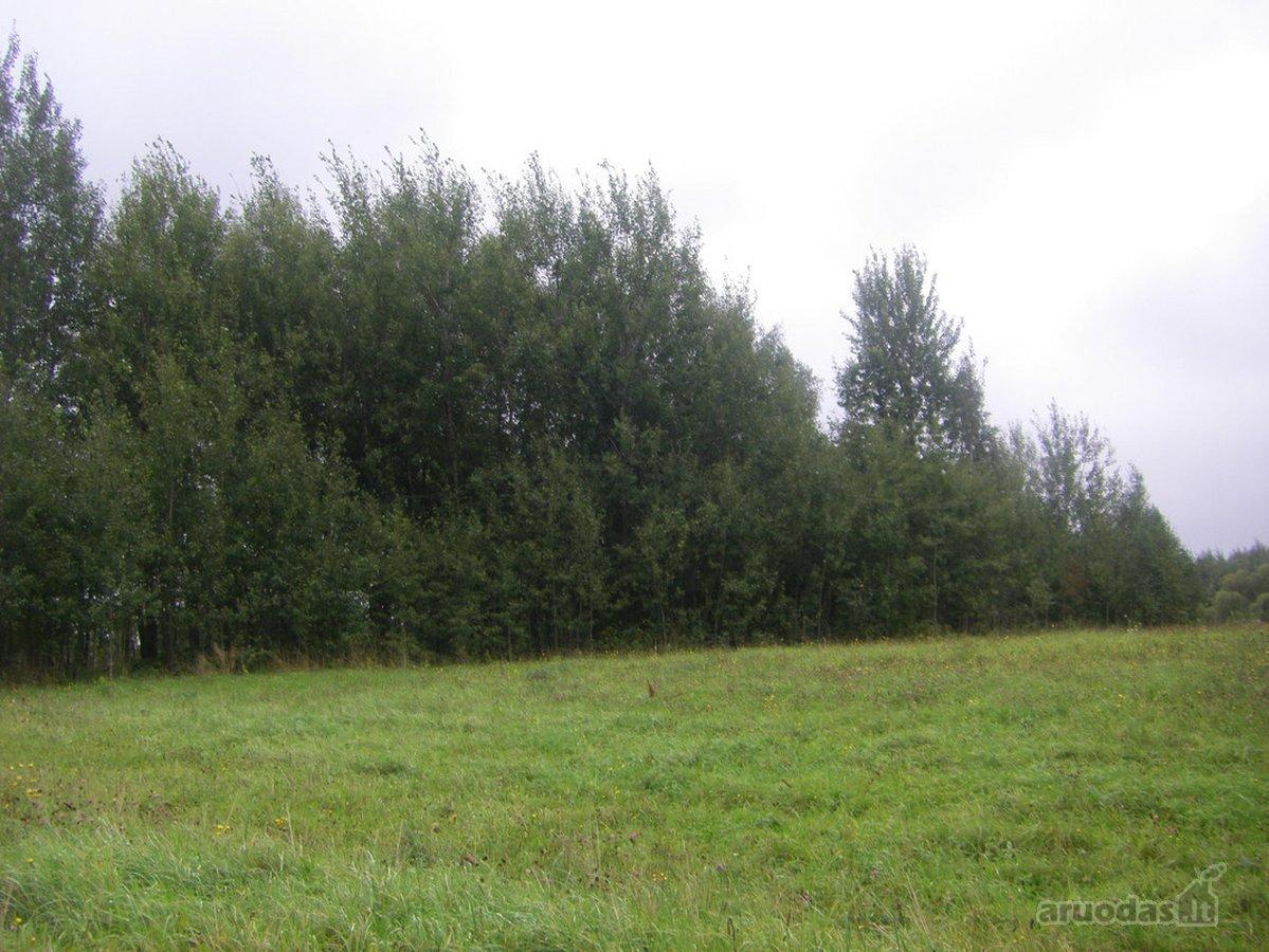 Vilniaus r. sav., Paberžės k., žemės ūkio paskirties sklypas