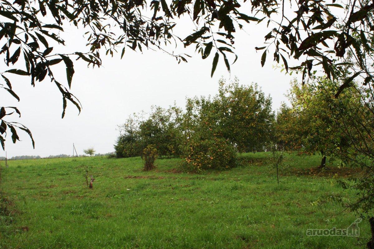 Vilniaus r. sav., Kyviškių k., Lakūnų g., kolektyvinis sodas sklypas