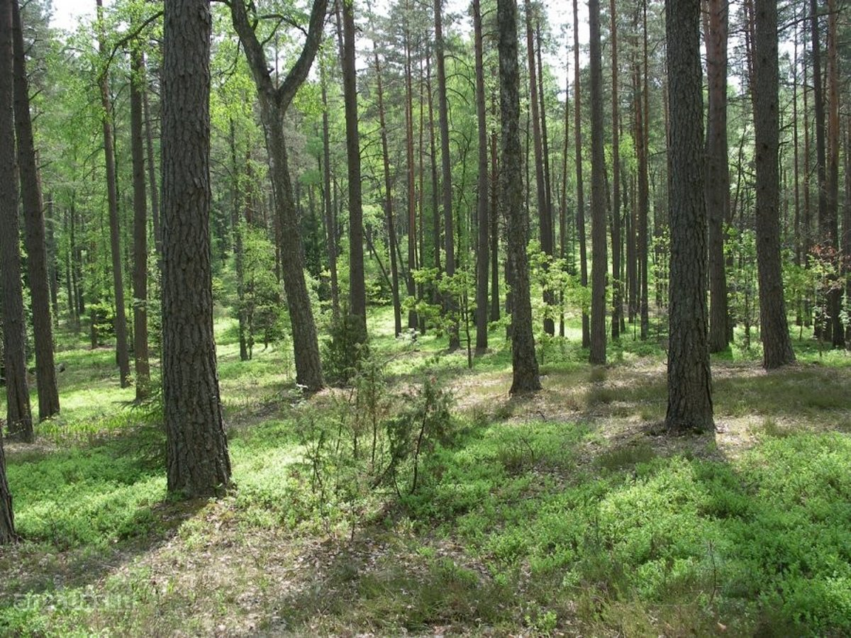 Anykščių r. sav., Žliobiškių k., miškų ūkio paskirties sklypas