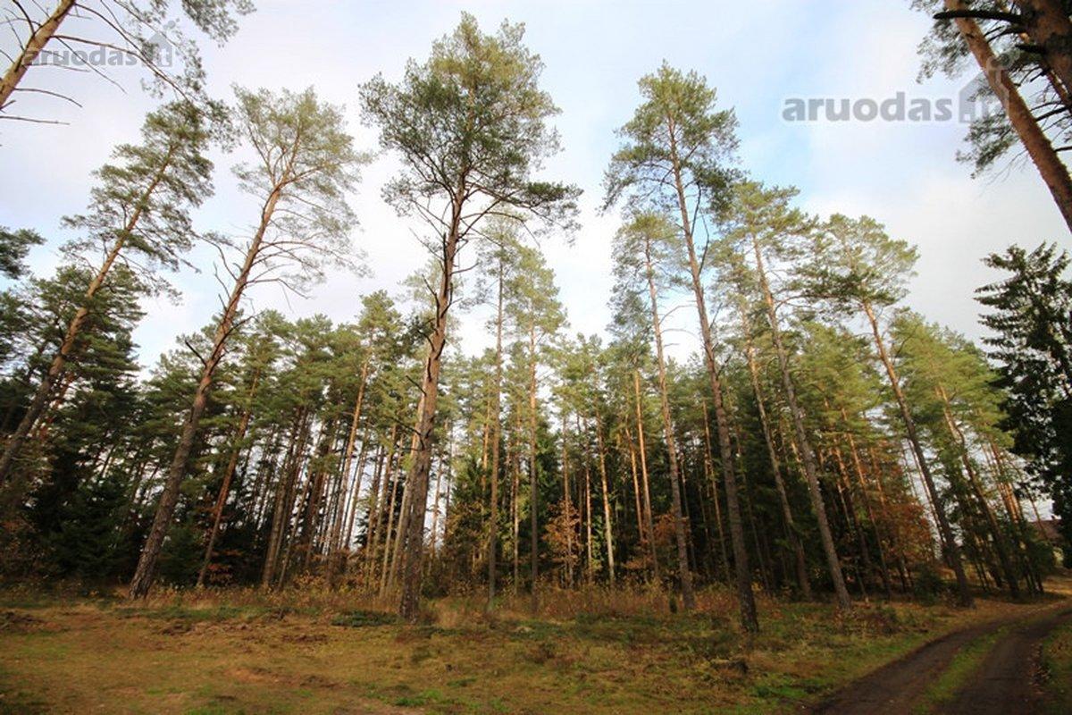 Vilniaus r. sav., Aukštuolės k., Vakaro 8-oji g., miškų ūkio paskirties sklypas