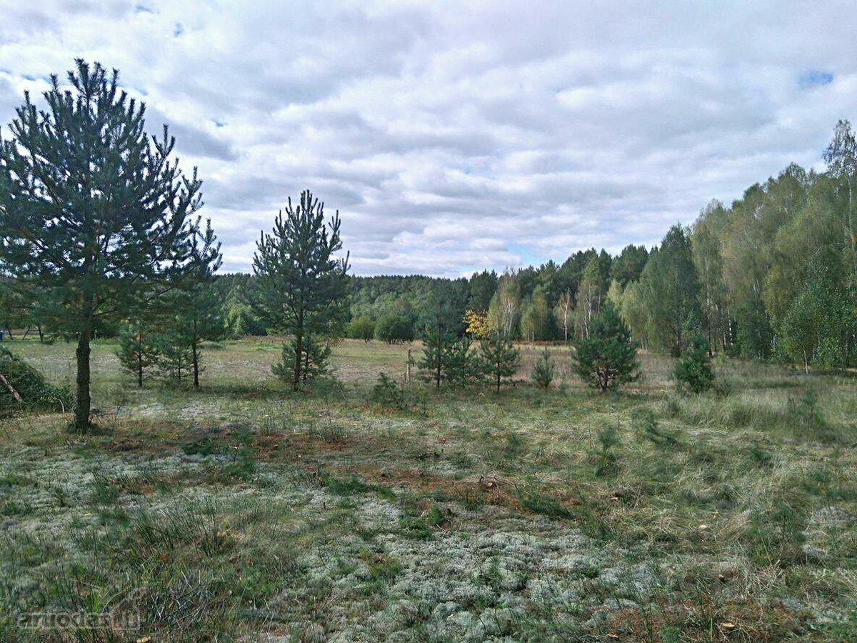 Varėnos r. sav., Maksimų k., namų valdos, miškų ūkio paskirties sklypas