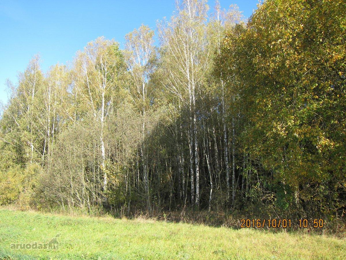 Širvintų r. sav., Aleksandravos k., forestrial purpose vacant land