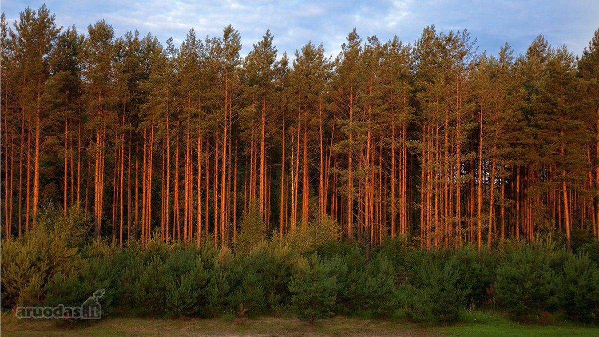 Švenčionių m., miškų ūkio paskirties sklypas