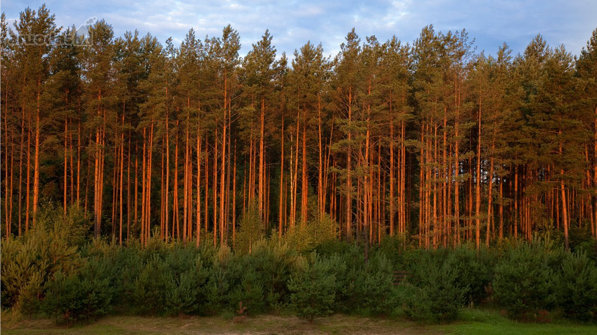 Švenčionių r. sav., Švenčionių m., miškų ūkio paskirties sklypas