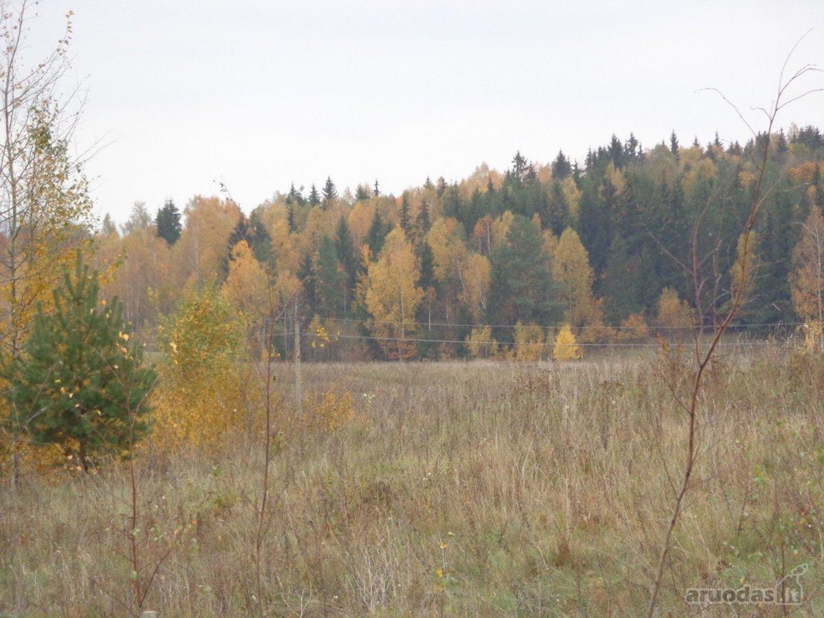 Vilniaus r. sav., Pikutiškių k., Pikutiškių g., žemės ūkio paskirties sklypas