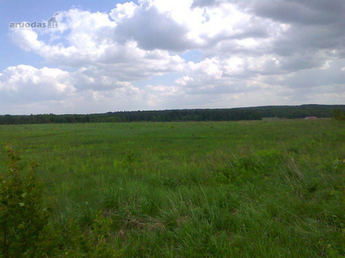 Netoli Vilniaus, Marazuose, vaizdingame