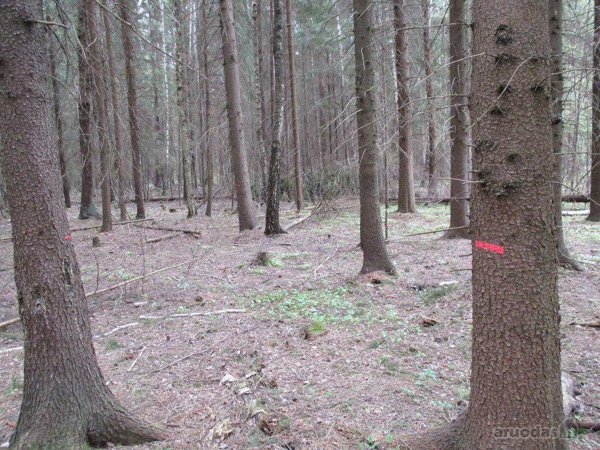 Švenčionių r. sav., Kairiškės k., miškų ūkio paskirties sklypas