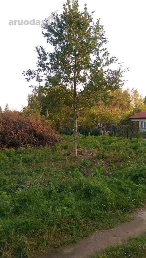 Vilniaus r. sav., Akmeniškių k., kolektyvinis sodas sklypas