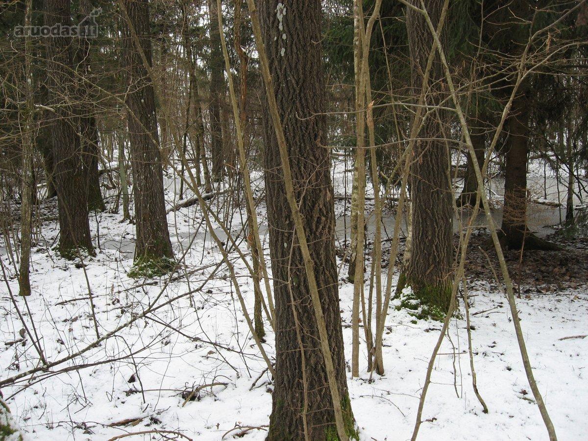 Molėtų r. sav., Čereškų k., miškų ūkio paskirties sklypas