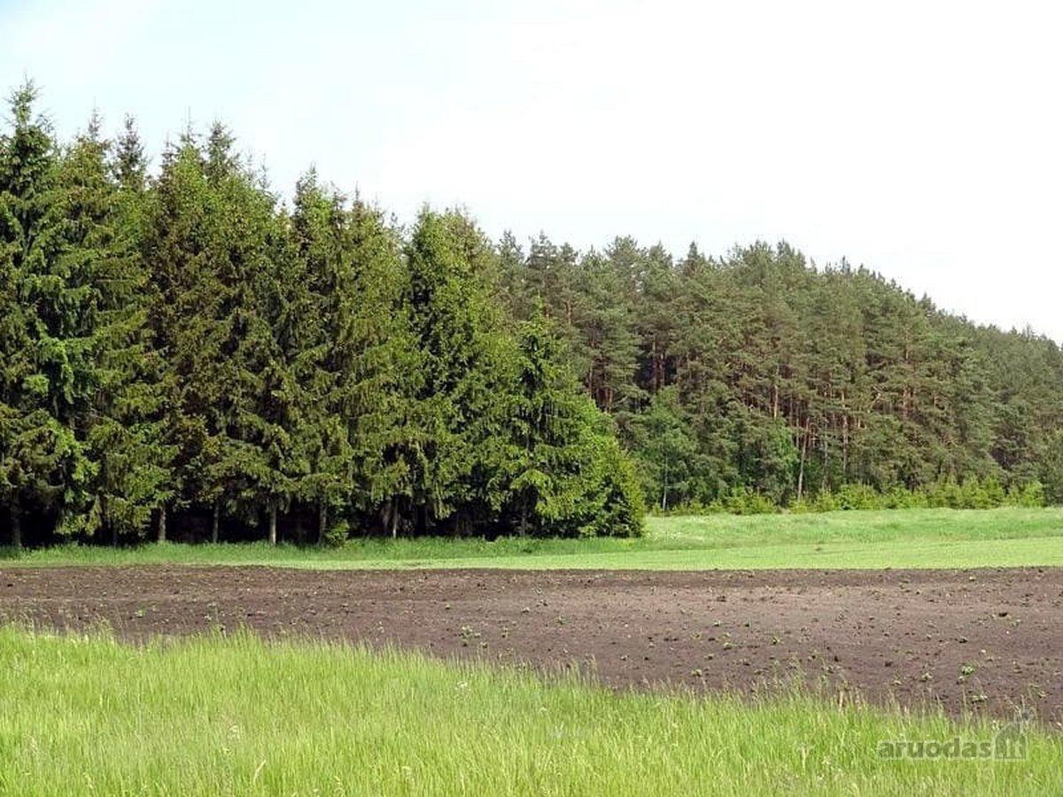 Žemės sklypas greta miško!