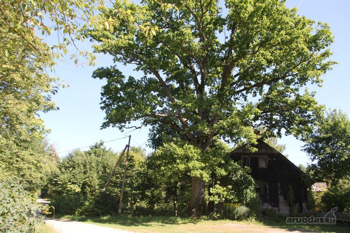 Telšių r. sav., Kungių k., medinė sodyba
