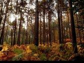 Parduodamas 1,24 ha žemės ūkio - miškų