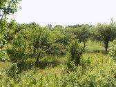 Parduodama jauki sodyba Kudrėnėlių kaime,