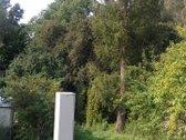 Parduodamas 6,36 arų sodo sklypas su nameliu