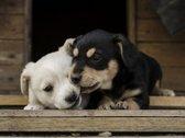 Dėmesio! Gyvūnų prieglauda ieško patalpų