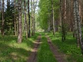Sena sodyba Kauno apskrityje (43a