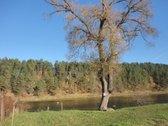 Vienoje iš gražiausių Lietuvos vietų, Neries