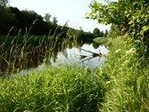 Parduodu sklypa prie Dubysos upes. 100 m upes