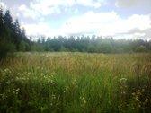 Ramioje vietoje, prie miško, Trakų Vokėje,