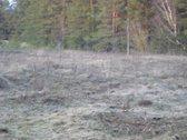 Gražaus reljefo, vaizdingoje vietovėje