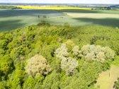 Parduodamas brandus miškas 6,46 ha Joniškio
