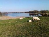 Molėtų raj. ant ežero kranto parduodama 57