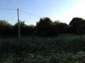 Buvęs kolūkio sodas, greta sodų bendrijos