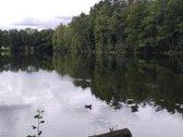 Išskirtinio grožio gamtos kampelis tarp ežerų.