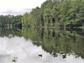 Išskirtinio grožio gamtos kampelis Bučeliškės