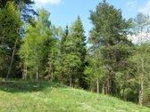 Parduodamas išskirtinis 20 a žemės sklypas Vilniaus raj., Avižienių k. Crybų g. 1D. Sklypą iš visų pusių supa brandus miškas. Viet...