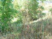 4,87 ha žemės sklypas Bubiuose, tarp Dubysos,